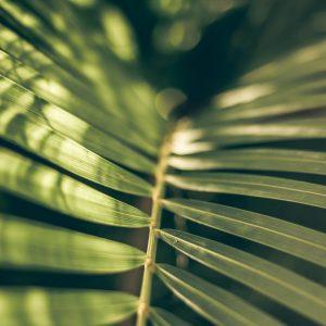 Plante tropicale zen